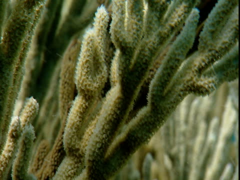 corals wave in the ocean's current. - history点の映像素材/bロール
