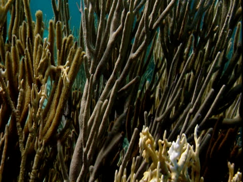 corals wave in the ocean's tides. - tide stock videos & royalty-free footage
