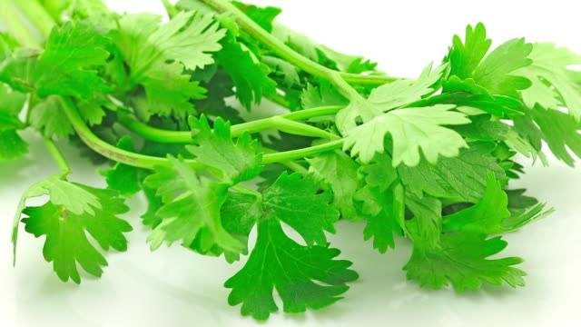 coriander - cilantro stock videos and b-roll footage
