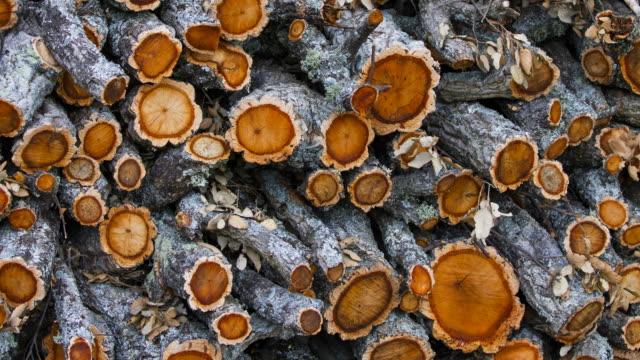 Cork Oak wood, Faia Brava, Côa Valley, Western Iberia, Portugal, Europe, Rewilding Europe