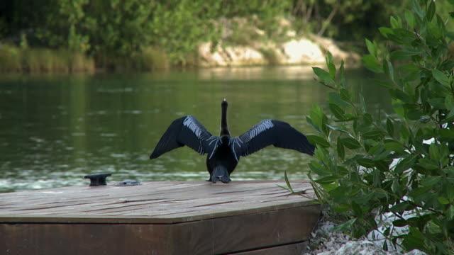 vídeos y material grabado en eventos de stock de slo mo, ws, cormorant drying wings on dock and flying away, playa del carmen, quintanaroo, mexico - playa del carmen