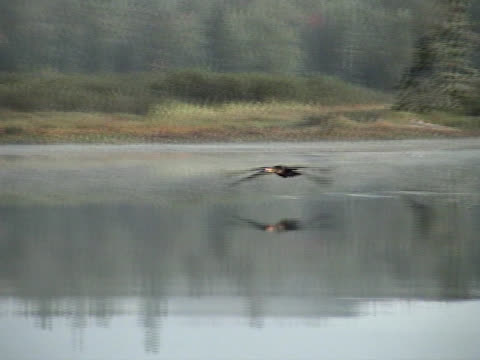 cormorant escape - named wilderness area stock videos & royalty-free footage