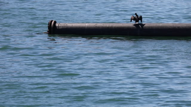 Cormorant perching on pipe at the Port of Los Angeles in Los Angeles California US on Friday March 23 2018