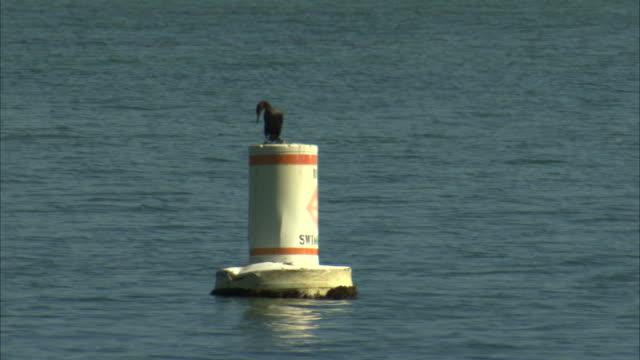 ws cormorant perching on top of buoy in ocean / miami, florida, usa - buoy stock videos & royalty-free footage