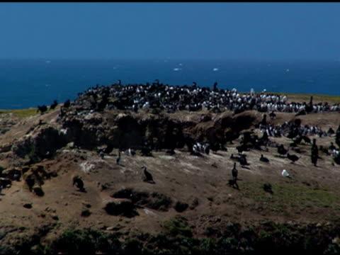 kormoran nistkolonie - gespreizte flügel stock-videos und b-roll-filmmaterial