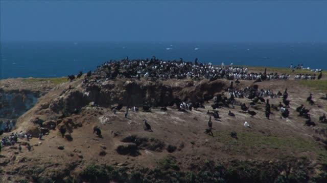 vídeos de stock e filmes b-roll de corvo-marinho viveiro de gralhas - parte do corpo animal