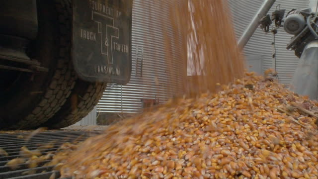 vidéos et rushes de ms corn being poured from truck/ manchester, michigan - silo