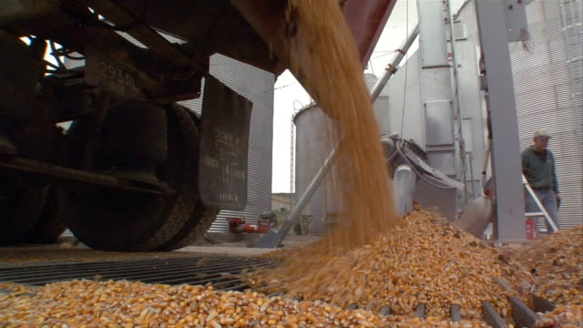 ms corn being poured from truck/ manchester, michigan - entladen stock-videos und b-roll-filmmaterial