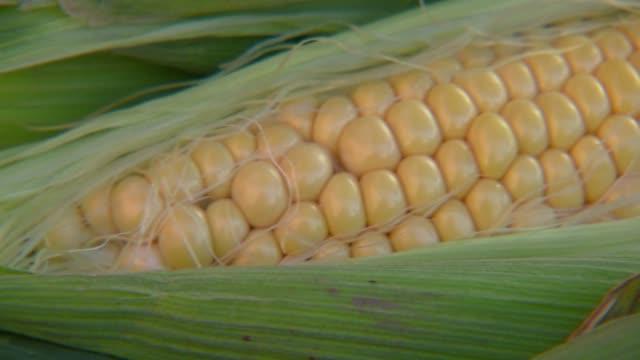 stockvideo's en b-roll-footage met corn cob - plant attribute