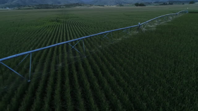 corn crops sprayed with water, aerial - spraying stock videos & royalty-free footage