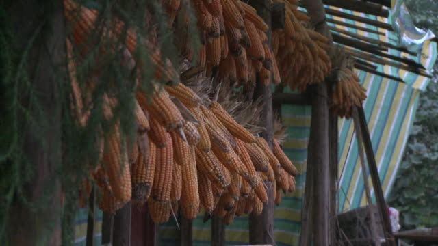 cu corn drying on rack, datong, sichuan, china - drying rack stock videos and b-roll footage
