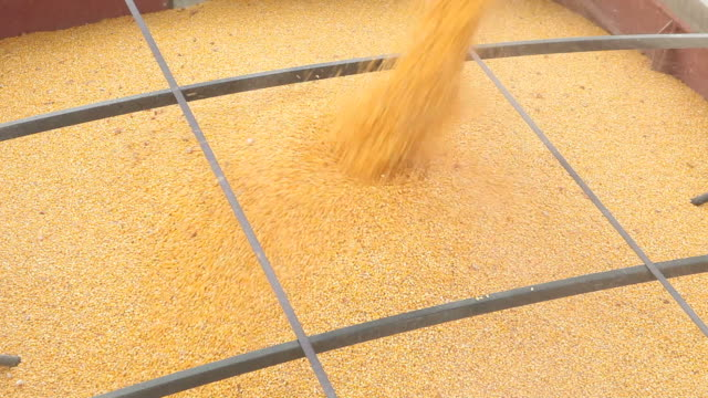 corn falling from combine auger into grain cart - grain cart stock videos & royalty-free footage