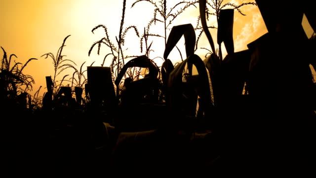 トウモロコシファームます。 - 道を譲る点の映像素材/bロール