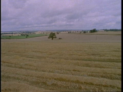 WA corn field after harvest, stubble in field, England