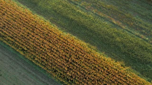 vídeos de stock, filmes e b-roll de vista aérea de campo de milho em névoa da manhã - geada