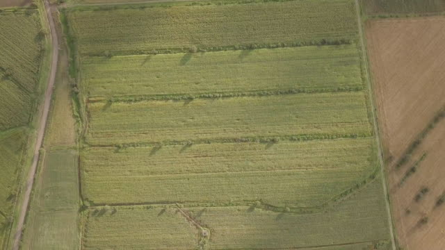 corn fields from above - rotten com stock videos and b-roll footage