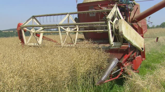 MS Corn harvester at work on field / Saarburg, Rhineland Palatinate, Germany