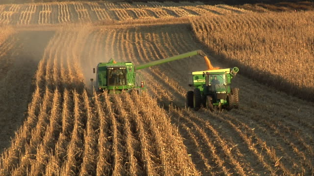 ha ws corn harvester in field shooting corn into grain cart being pulled by tractor/ manchester, michigan - grain cart stock videos & royalty-free footage