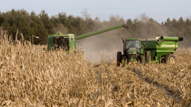 tl ws corn harvester in field shooting corn into grain cart being pulled by tractor/ manchester, michigan - grain cart stock videos & royalty-free footage