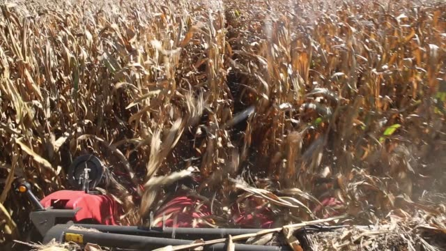 corn is harvested with a case ih agricultural equipment inc. combine harvester in princeton, illinois, u.s., on monday, oct. 9, 2017. photographer:... - harvesting stock videos & royalty-free footage