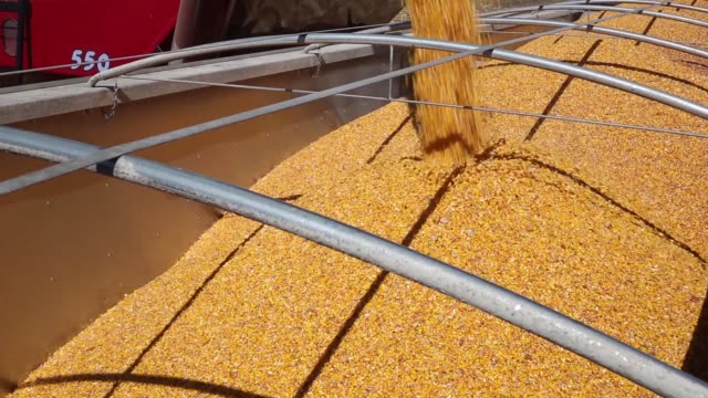 corn is poured out of a combine harvester auger into grain cart on truck in princeton illinois us on monday oct 9 2017 photographer dan acker shots... - grain cart stock videos & royalty-free footage