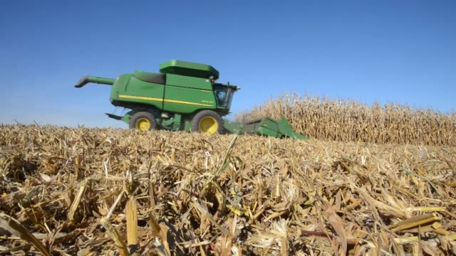corn is transferred from one grain cart to another during harvest truck filled with corn grain is emptied into an underground basin cornfield harvest... - grain cart stock videos & royalty-free footage