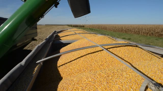 corn is transferred from one grain cart to another during harvest corn harvest malden illinois on october 10 2013 in malden illinois - grain cart stock videos & royalty-free footage