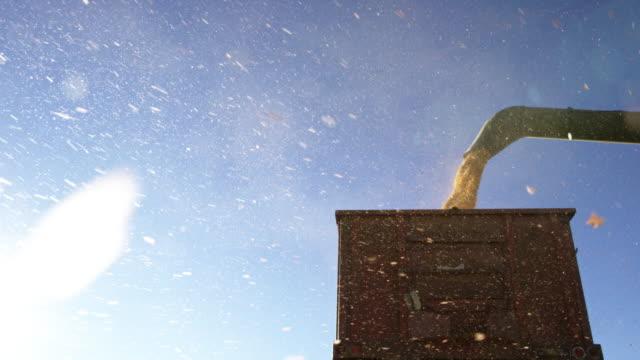 Paillettes et grains de maïs tombent en Slow Motion de Auger un Combinat dans un camion de Grain à la récolte sous un ciel bleu