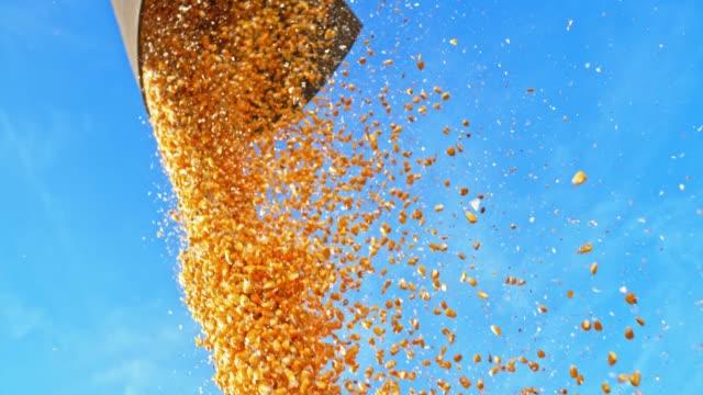 vídeos de stock, filmes e b-roll de slo mo grãos de milho caindo da liga em trailer - meio de transporte