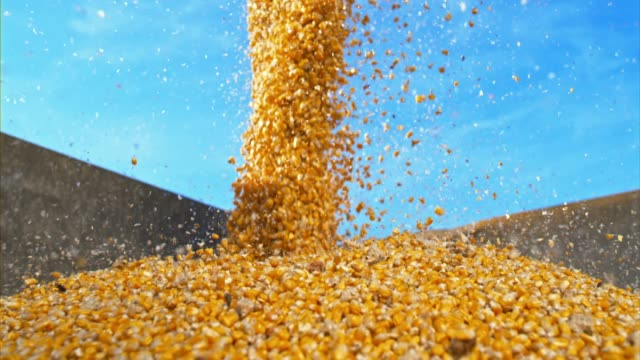 slo mo ds corn kernels falling into container - agricultural machinery stock videos & royalty-free footage