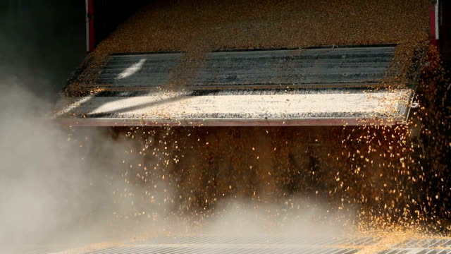 corn bearbeitung factory - handhaben stock-videos und b-roll-filmmaterial