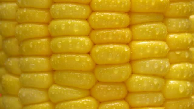 vídeos y material grabado en eventos de stock de maíz giratorio con macro shot - maíz zea