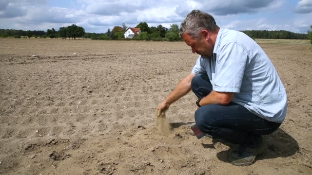 corn to be used as animal feed stands stunted by drought at a parched farmer's field on august 15 2018 near golssen germany southern brandenburg... - dürre stock-videos und b-roll-filmmaterial