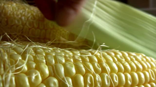 corn - tassel stock videos & royalty-free footage