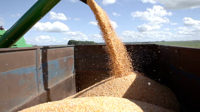 corn - harvesting stock videos & royalty-free footage
