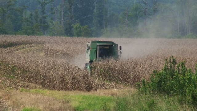 cornfield gone dry - agricultural equipment stock videos and b-roll footage