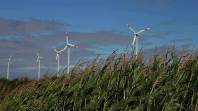 HD Cornfield in Front of a Wind Farm