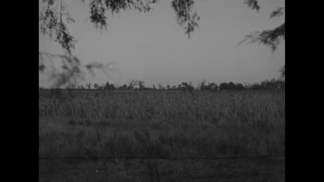 cornfield / various shots dried cornstalks in field / note exact day not known - dust bowl stock videos and b-roll footage