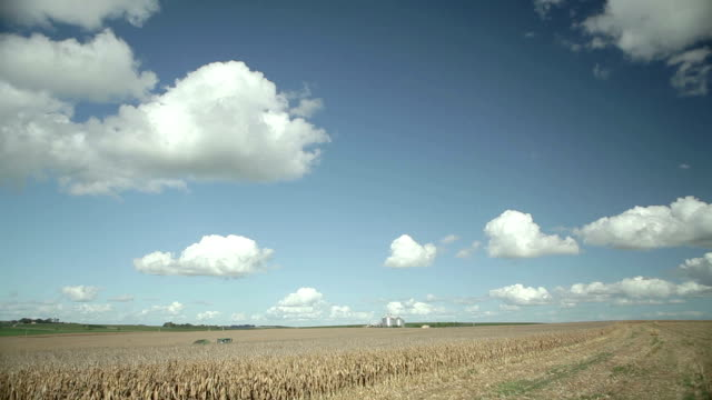 vídeos de stock, filmes e b-roll de cornfield - soja