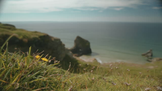 vidéos et rushes de cornish beach and ocean in summer - plante sauvage