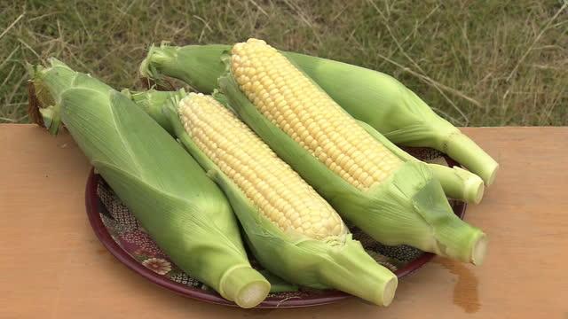 corns on a plate, ibaraki, japan - 六月点の映像素材/bロール