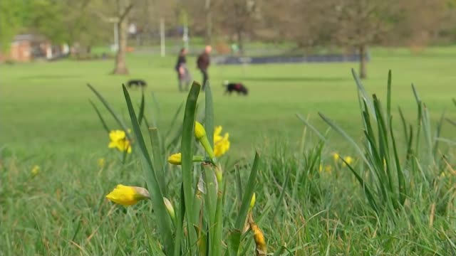 brockwell park reopens being closed because after too many people ignored social distancing rules; england: london: lambeth: brockwell park: ext... - animal stock videos & royalty-free footage