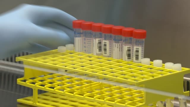 cambridge clinical laboratories testing laboratory; england: cambridge: cambridge clinical laboratories: int scientist/lab technician working at fume... - uk点の映像素材/bロール