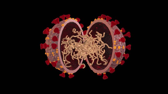 vídeos de stock e filmes b-roll de coronavirus covid-19 mutation animation - mutação genética