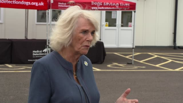 duchess of cornwall visits centre for dogs trained to detect covid-19; uk, milton keynes; dog, training, covid-19 coronavirus, sniffing, medical... - smelling stock videos & royalty-free footage