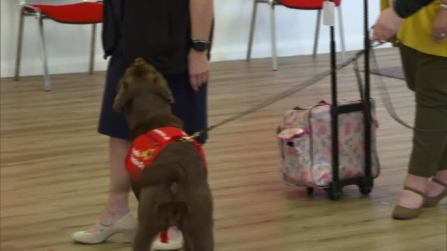 duchess of cornwall visits centre for dogs trained to detect covid-19; england: buckinghamshire: milton keynes: medical detection dogs training... - smelling stock videos & royalty-free footage