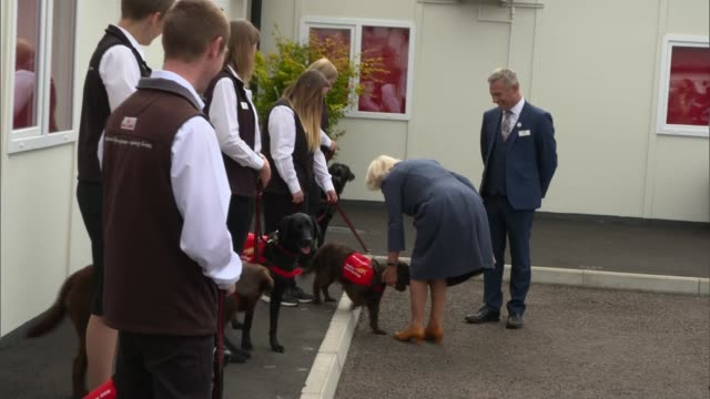 duchess of cornwall visits centre for dogs trained to detect covid-19; england: buckinghamshire: milton keynes: medical detection dogs training... - stroking stock videos & royalty-free footage