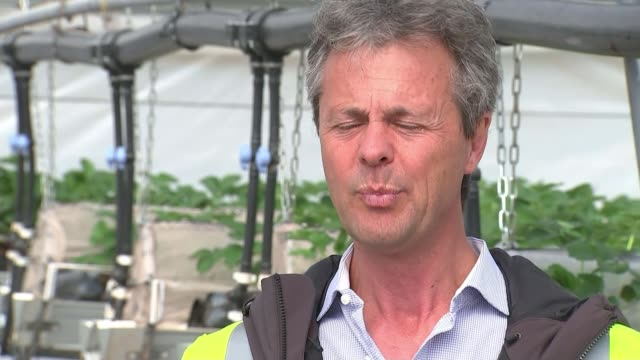 farmers call for help in recruitment to prevent food rotting in the fields; uk, herefordshire, ledbury, cardiff / fruit trees and plants growing in... - herefordshire stock videos & royalty-free footage