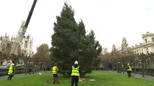 government unveils plans to allow families to spend christmas together; england: london: westminster: ext gvs christmas tree being lowered by crane... - vox populi stock videos & royalty-free footage