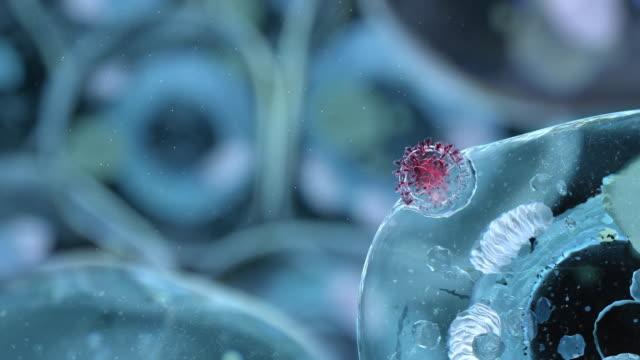 vídeos de stock e filmes b-roll de coronavirus penetration - objeto pontudo